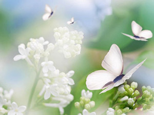 flower-and-buttefly3